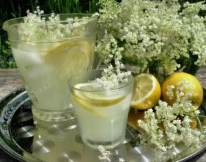 Sweet elder cordial