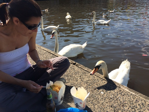 hamburg_noodles_swans