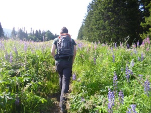Trekking through the late-summer flowers