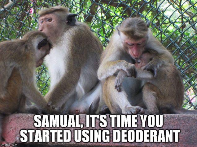monkey memes - deoderant