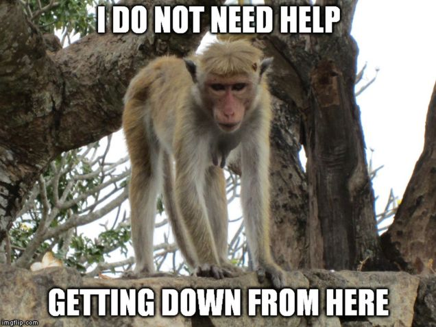 monkey meme - don't need help