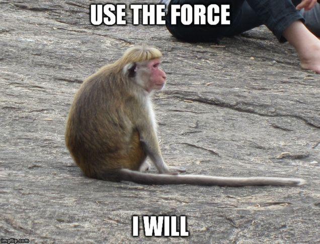 monkey memes - force