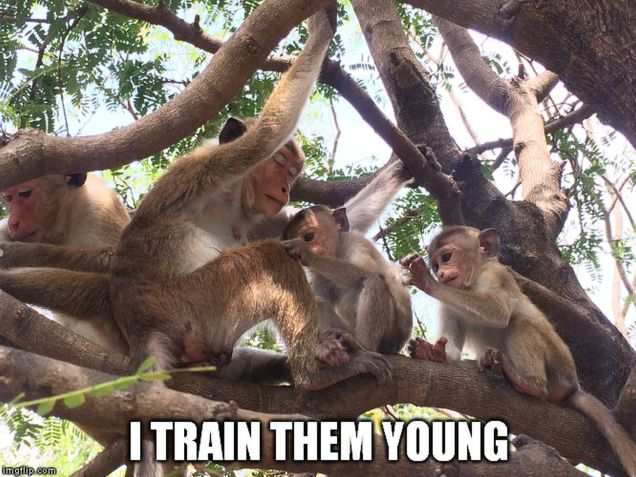 monkey meme - train young