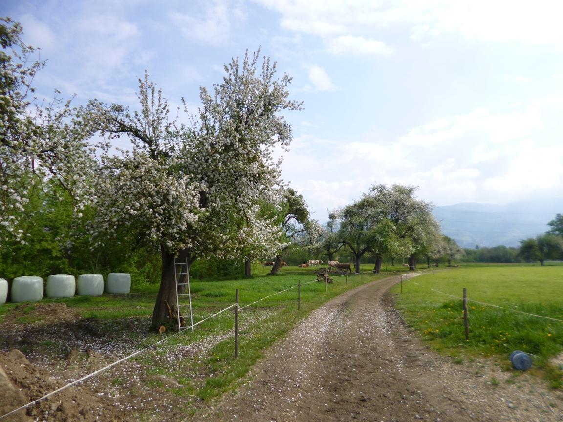 Spring Austria