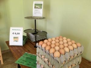 chicken farm eggs