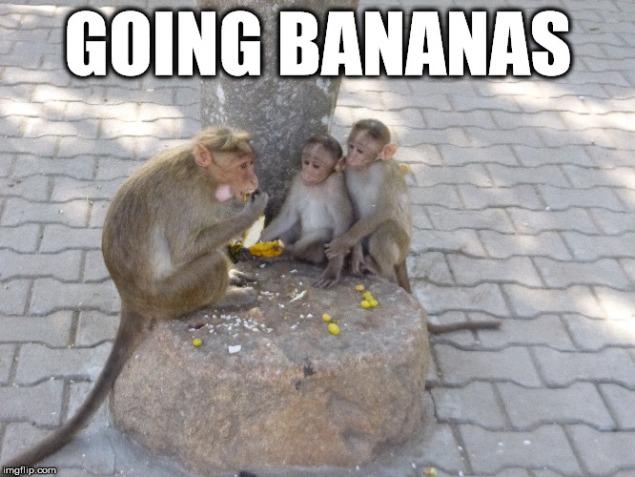 Monkey meme