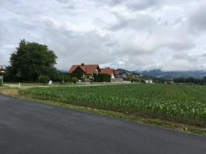 Wolfsberg - fields