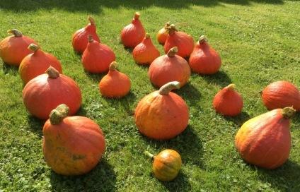 gardening pumpkin