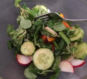 gardening salad