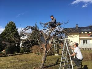 garden austria pruning