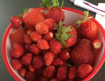 garden austria strawberries