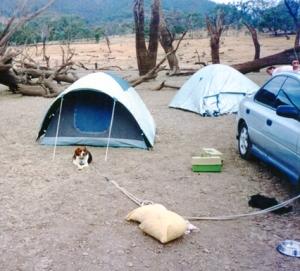 captain beagle camping RIP