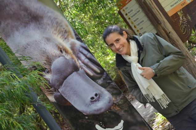 platypus Healesville Sanctuary