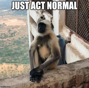 india monkey memes