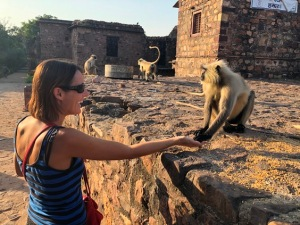 Feeding monkeys in India