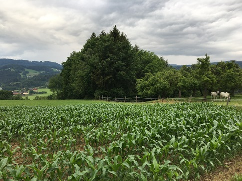 Wolfsberg countryside