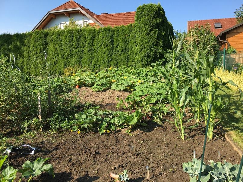 Garden 2020 vegetables