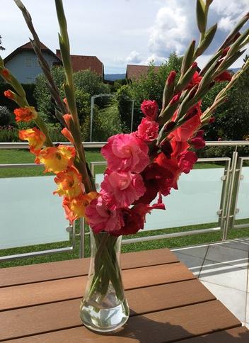 flowers gladiolas